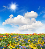 Prado colorido de las flores y campo de hierba verde sobre el cielo azul Imagenes de archivo