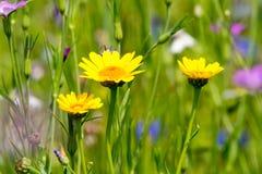 Prado colorido del verano con las flores salvajes Fotografía de archivo