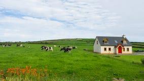 Prado com animais de exploração agrícola Fotos de Stock