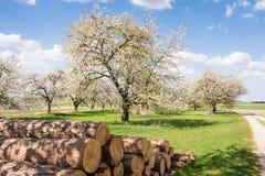 Prado com as árvores de fruto de florescência Imagens de Stock Royalty Free