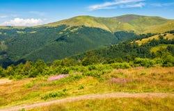 Prado com as flores roxas em montanhas Carpathian no verão Foto de Stock Royalty Free
