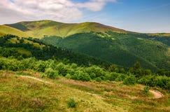 Prado com as flores roxas em montanhas Carpathian no verão Foto de Stock