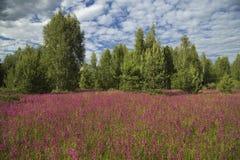 Prado com as flores selvagens bonitas no verão Fotos de Stock Royalty Free