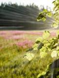 prado com as flores - verticais, colaborador móvel do campo dos plenos verões Imagem de Stock Royalty Free