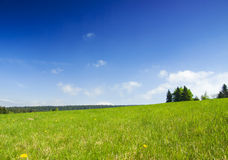 Prado com céu azul. Imagem de Stock