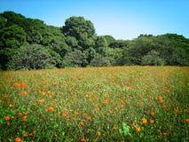 Prado com flores Imagens de Stock