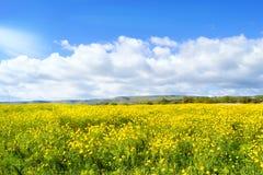 Prado com flores amarelas - terra do planeta - férias Foto de Stock Royalty Free