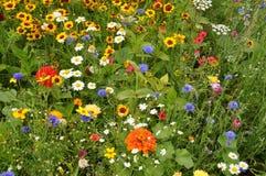 Prado com flores do verão fotografia de stock royalty free