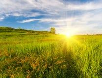 Prado com grama verde e o céu azul Fotos de Stock
