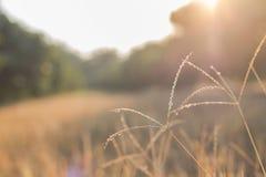 Prado com gramas selvagens, imagem macro da floresta com profundidade pequena de Fotos de Stock