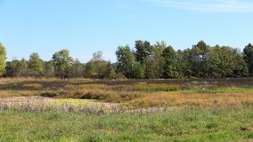 Prado com a lagoa secada cercada por cattails e por árvores Fotografia de Stock