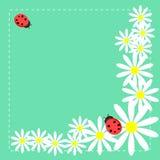 Prado com margaridas e ladybag Imagem de Stock