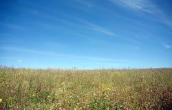 Prado com muitas flores do campo sob o céu azul bonito Imagens de Stock Royalty Free