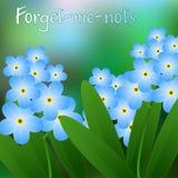 Prado com os miosótis que florescem, azul, bonito Vetor Imagens de Stock Royalty Free