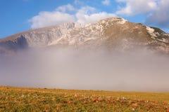 Prado com picos do açafrão e de montanha no fundo Imagem de Stock Royalty Free