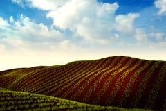 Prado com trigo ou vegetais e trator crescentes no horizonte Fotos de Stock Royalty Free