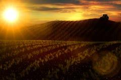 Prado com trigo ou vegetais e trator crescentes no horizonte Fotografia de Stock