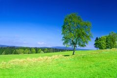 Prado com uma árvore. Imagens de Stock Royalty Free