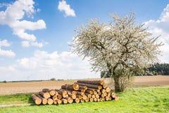 Prado com uma árvore de fruto de florescência Imagens de Stock