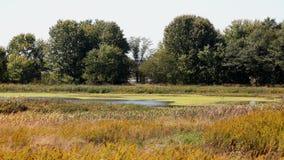 Prado com uma lagoa cercada por cattails e por árvores Foto de Stock Royalty Free