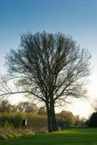 Prado con árboles y un alto asiento Foto de archivo