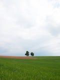 Prado con dos árboles Fotos de archivo