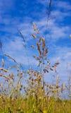 Prado con la hierba verde fresca y las flores salvajes Foto de archivo libre de regalías