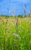 Prado con la hierba verde fresca y las flores salvajes Foto de archivo