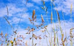 Prado con la hierba verde fresca y las flores salvajes Fotos de archivo libres de regalías