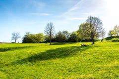 Prado con la hierba verde y el árbol frescos Gente de reclinación cerca del árbol Verano, cielo azul y sol agradable Fotografía de archivo