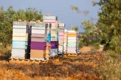 Prado con las colmenas de la abeja Foto de archivo