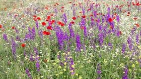 Prado con las flores coloridas almacen de video