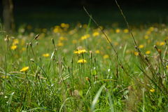 Prado con las flores florecientes Fotos de archivo