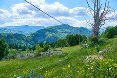 Prado con las flores salvajes del azul, amarillas y blancas, visión pastoral con las montañas en el fondo, montañas de Apuseni imagenes de archivo