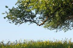 Prado con las flores y el árbol Imágenes de archivo libres de regalías