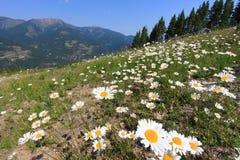 Prado con las flores y la montaña en el fondo Imágenes de archivo libres de regalías