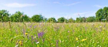 Prado con las hierbas y las flores en primavera Fotografía de archivo