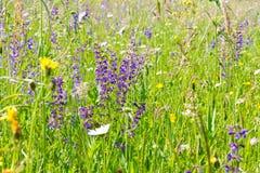 Prado con las hierbas y las flores en primavera Foto de archivo