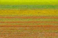 Prado con las rayas de la hierba en diversos colores con el espacio de la copia para su texto fotografía de archivo
