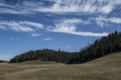 Prado con los árboles Fotografía de archivo