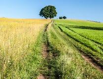Prado con los árboles, camino y el cielo claro Imágenes de archivo libres de regalías