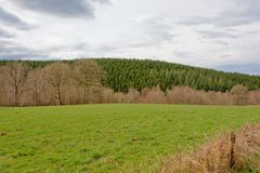 Prado con los árboles de hojas caducas desnudos del invierno y colina con el bosque del pino debajo de un cielo nublado Fotografía de archivo