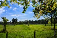Prado con los árboles frutales dispersados Foto de archivo libre de regalías