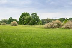 Prado con los árboles grandes de la flor y el cielo azul Paisaje checo Fotografía de archivo