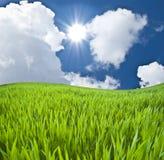 Prado con una hierba joven verde Imagenes de archivo