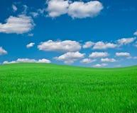 Prado con una hierba verde y el azul marino fotografía de archivo