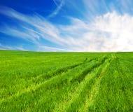 Prado con una hierba y el cielo fotos de archivo