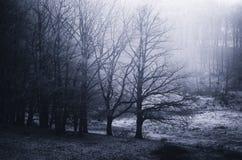 Prado congelado do inverno na manhã fria Imagens de Stock Royalty Free