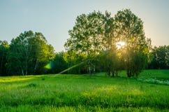 prado cubierto con la hierba enorme verde Imagen de archivo libre de regalías