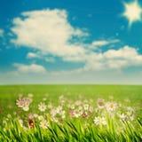 Prado da beleza com flores e grama verde Foto de Stock